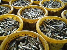 AoS welcomes safe fishing Declaration