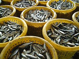 The Future of Fishing